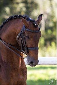 Photo cheval a vendre ESCORIAL (SRB)